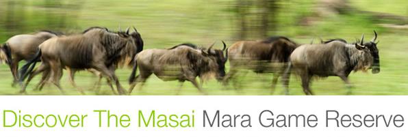 banner_masai_mara