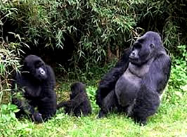 Bwindi National Park_2
