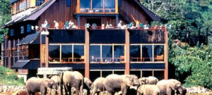 the_ark-kenya